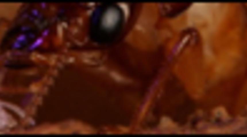 Infestation d'insectes sur les écrans de cinéma