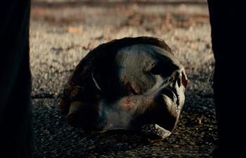 Découvrez l'angoissant teaser d'Halloween Kills
