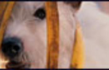 Nouvelle bande-annonce de la comédie familiale Hotel for Dogs