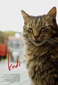 Kedi - Au royaume des chats